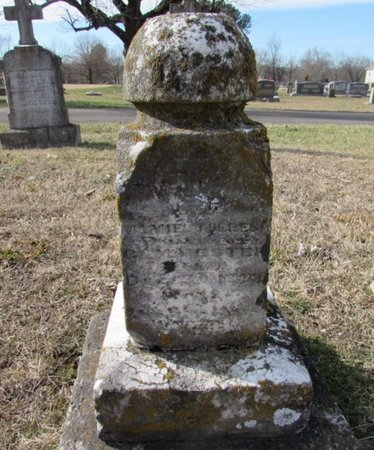 MESTER, MINNIE - Lawrence County, Tennessee | MINNIE MESTER - Tennessee Gravestone Photos