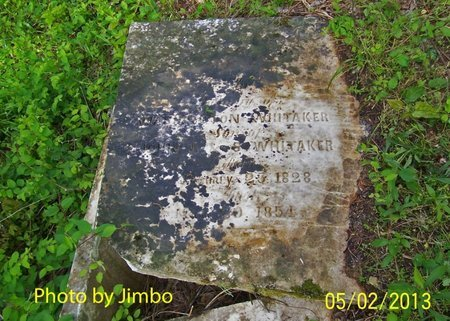 WASHINGTON, WHITAKER - Lincoln County, Tennessee | WHITAKER WASHINGTON - Tennessee Gravestone Photos