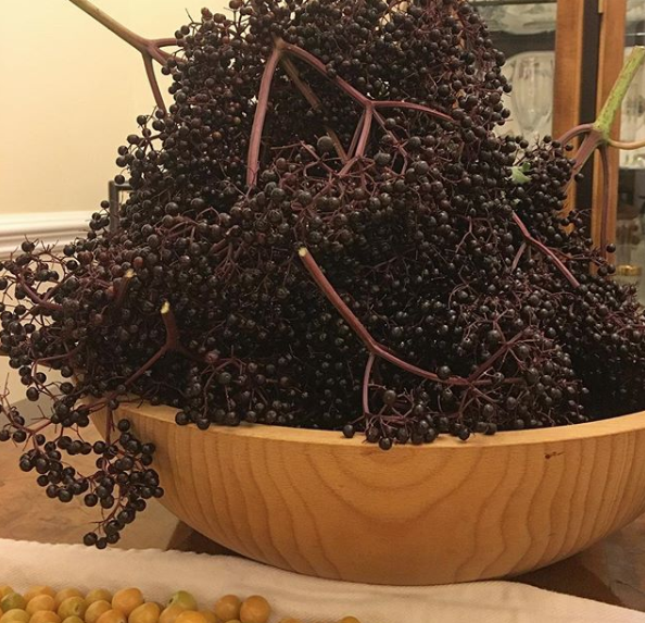 Believe it or not, this is only one night's elderberry harvest during the peak of elderberry season. They're very prolific plants. How to avoid getting sick, by Tyrant Farms