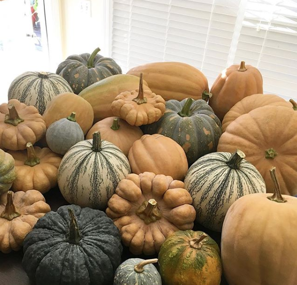 We grow lots of organic produce using regenerative/sustainable methods, like these heirloom winter squash. But we're nowhere close to being self-sufficient, nor are we trying to be. self sufficienct
