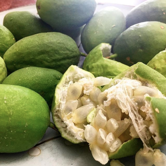 A nice pile of ripe maypops. Inside each green-skinned fruit is a cluster of seeds surrounded by thick deliciously flavored fruit pulp. The skin of the fruit should be removed before eating the inside. Passiflora incarnata, native passion fruit