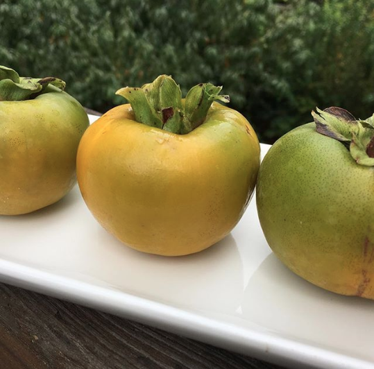 Asian persimmons - unlike American persimmons, you can eat these when they're still crunchy, although the flavor sweetens the longer you let them sit on the tree (especially aided by cooler temps).