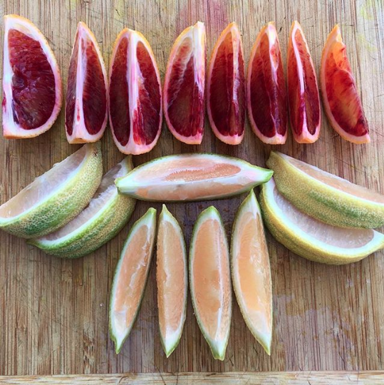 Getting to eat fresh organic citrus throughout the year is adequate reward for the work that goes into growing them. Moro blood oranges (top) and variegated pink lemons (bottom).