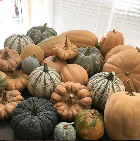 We grow a wide range of cucurbits, like these heirloom winter squash.