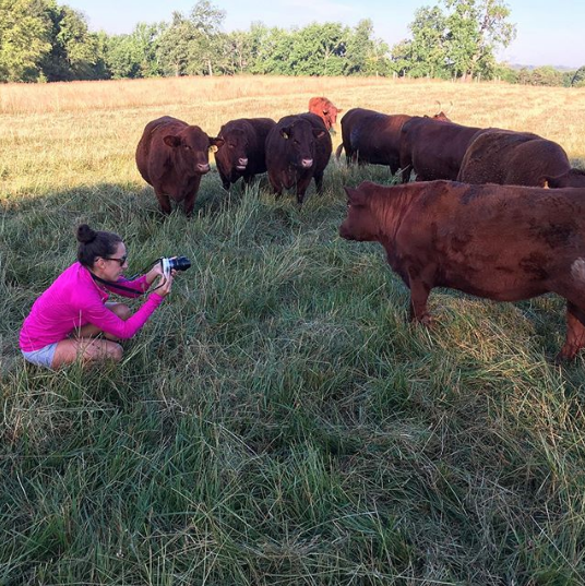 The Tyrant photographing Red Devon cattle at Walker Century Farms in Anderson, SC. (The grass in this area was chopped to allow for better photography of the cattle.) They're a grass-fed, grass-finished cattle farm that's been in the same family for over 100 years. They also raise pastured pork, eggs, and other produce. How do we get more operations like this to become mainstream in our food system?