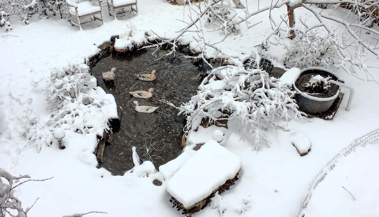 Our DIY backyard pond on a cold winter day.