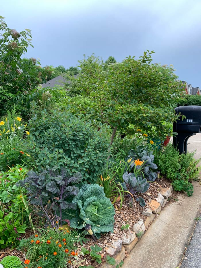 We have quite a lot of veggies growing throughout our yard. Throughout the first trimester, The Tyrant could not even think about eating vegetables without getting nauseous.