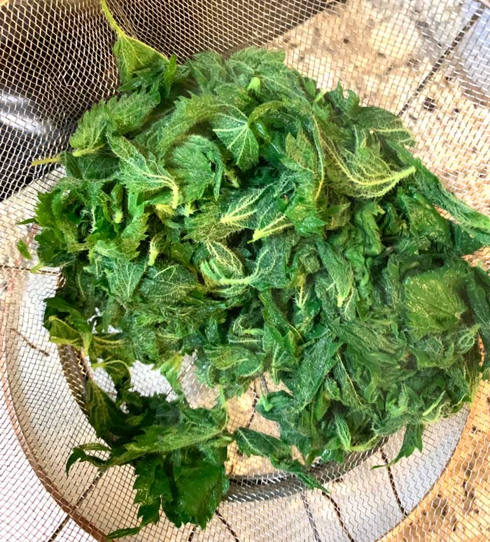 This is what your blanched stinging nettles should look like after they're toss-dried. Let them cool, then add them to the pesto.