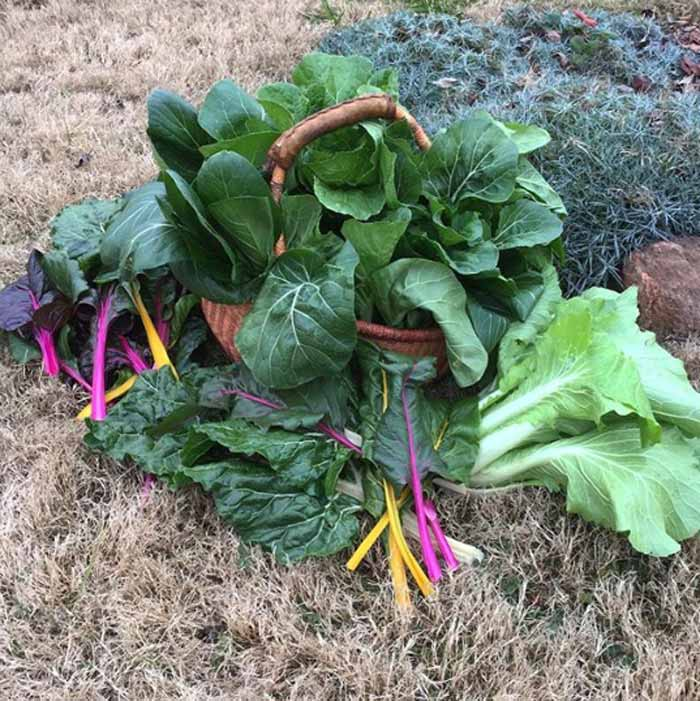 Brr. It's cold and gloomy outside, but this December garden harvest brightened our spirits.