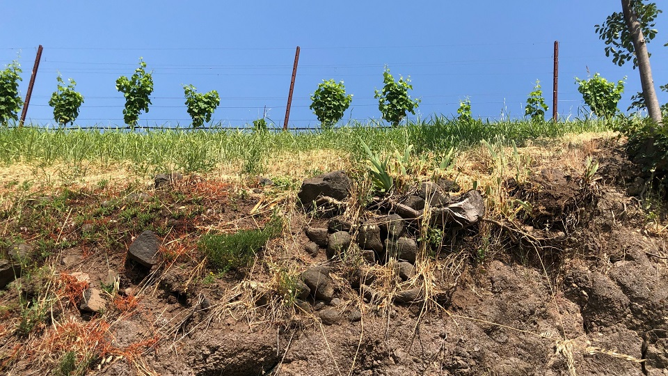 Soave and the Still White Wines of Veneto (Jul 2019) | Vinous - Explore All Things Wine