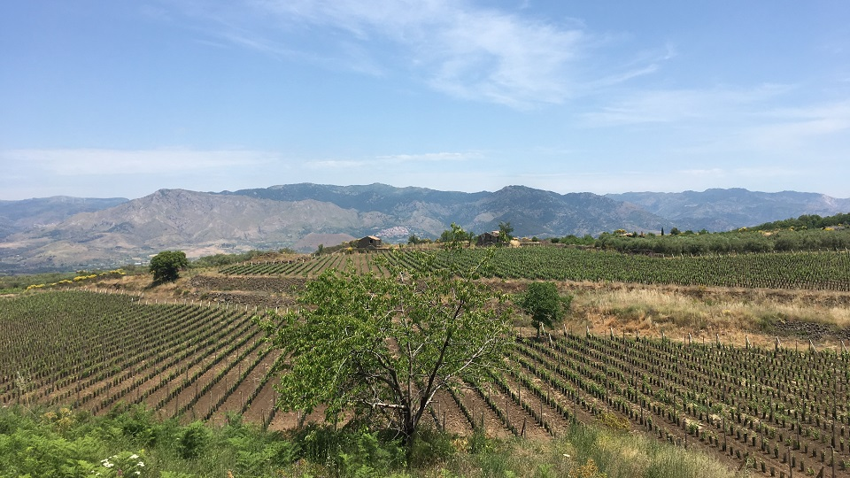 Sicily: Where Great Wines and Lava Flow (Aug 2019) | Vinous - Explore All Things Wine
