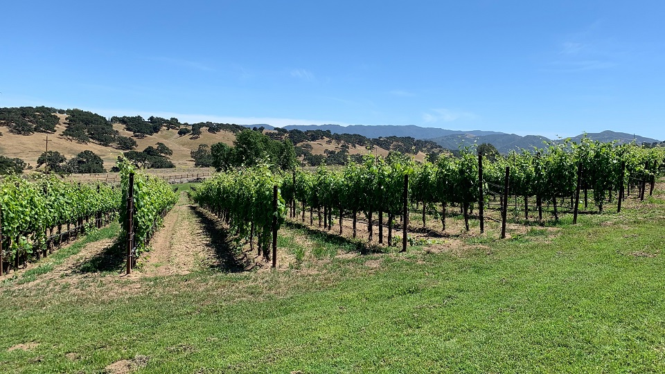 Santa Barbara: Present & Future (Sep 2019) | Vinous - Explore All Things Wine
