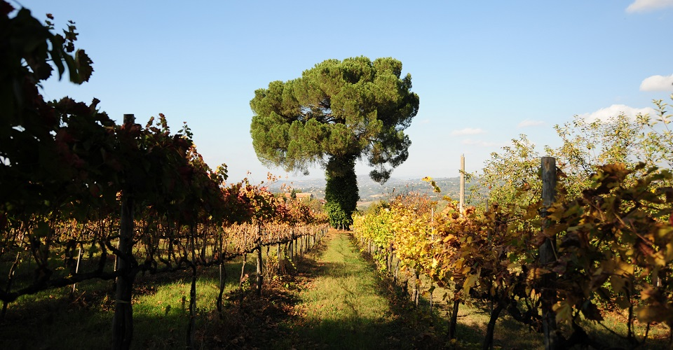 Campania 2018 Early Appeal And Accessibility Nov 2019