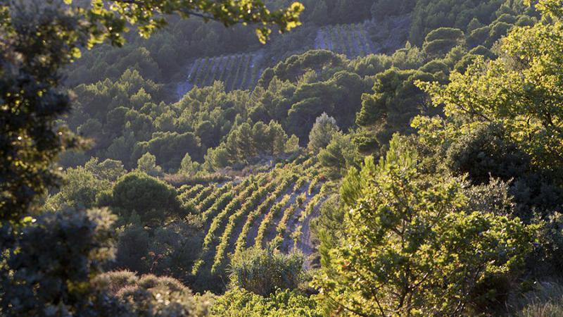 Vacqueyras: The Southern Rhône's Stealth Appellation (Feb 2020) | Vinous - Explore All Things Wine