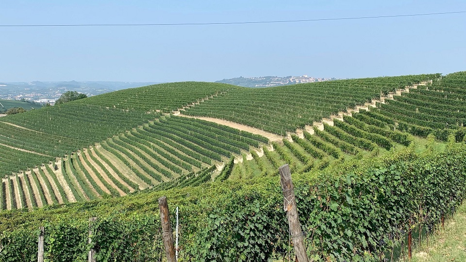 Barbaresco: The Highs & Lows of 2016-2020 (Oct 2020)   Vinous - Explore All Things Wine