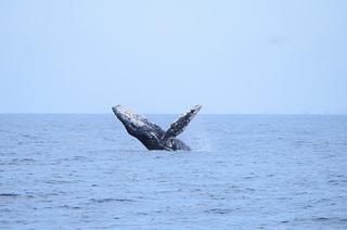 Temporada de ballenas en Puerto Vallarta