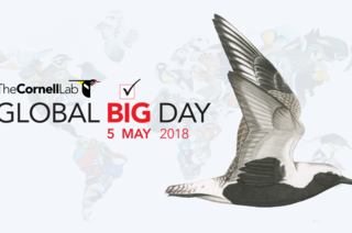 Global Big Day