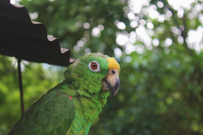 Colombia se alzó con el título mundial de avistamiento de aves