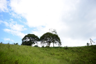 Sendero ecológico