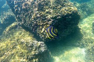 Underwater Photos