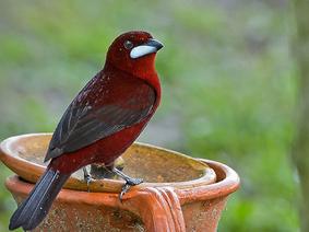 Avistamiento de Aves y Fauna en el Meta
