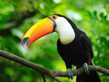 Avistamiento De Aves (Isla Palma)