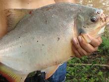 Pesca Con Caña (máximo 1 Kg.)