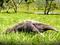 Piscilago Melgar   Parque Y Zoológico