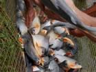 Pesca Deportiva en la Tonga Hotel Campestre