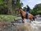 Cabalgatas   El Encanto