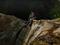 Cascadas Los Chorros