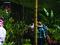 Taller De Siembra De Orquídeas
