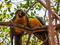 Pasadia Isla Palma Reserva Natural