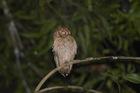 Avistamiento de Aves en Cubarral Medio Día