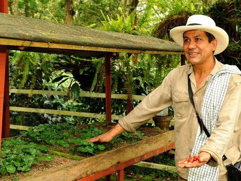 proceso de cultivo y producción del café colombiano