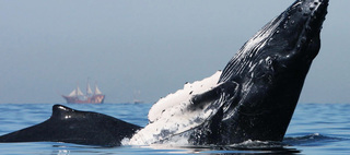 Whale Season Begins in Puerto Vallarta