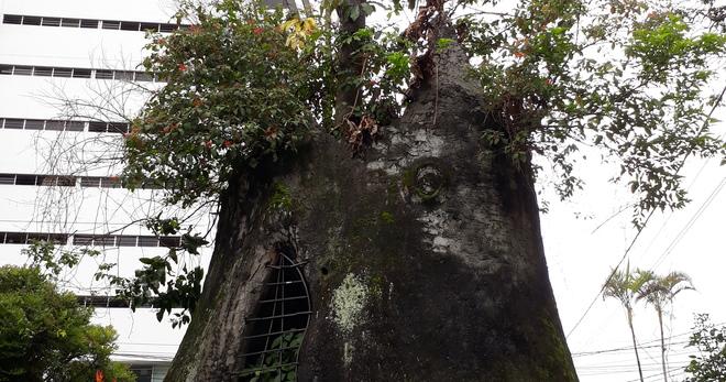 El Arbol Del Amor Tree Of Love