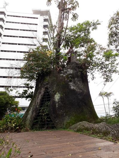 El Arbol del Amor - Tree of Love