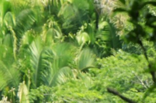 Ecoturismo: mejores tours en Puerto Vallarta