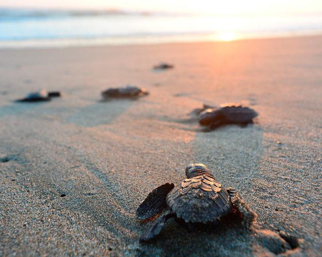 8 Datos curiosos sobre la temporada de tortugas
