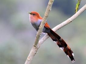 Avistamiento de Aves en Quindio