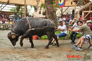 Parque Panaca - Galería de Fotos