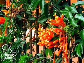 Fauna Y Flora