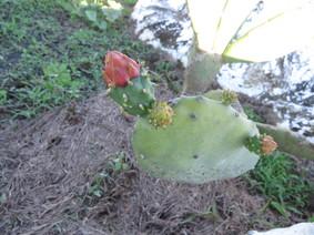 Flora y Fauna en Polangy
