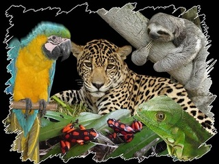 Rechazamos y denunciamos el trafico ilegal de fauna silvestre