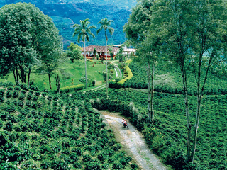 Colombian Coffee Cultural Landscape