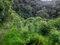 Caminata Al Bosque De Bromelias