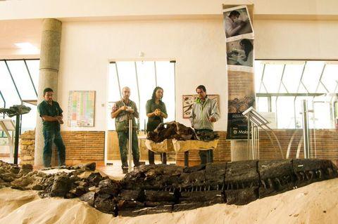 El Centro de Investigaciones Paleontologicas - CIP