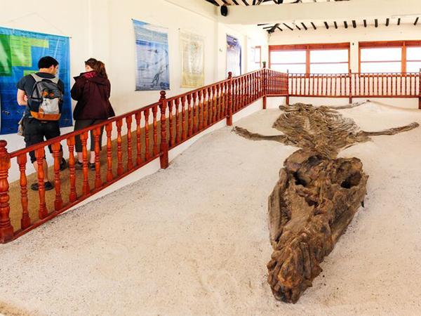 Museo - El Fósil