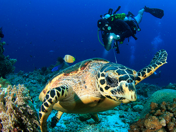 Diving for Certified Divers